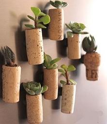 Dla roślinek :D