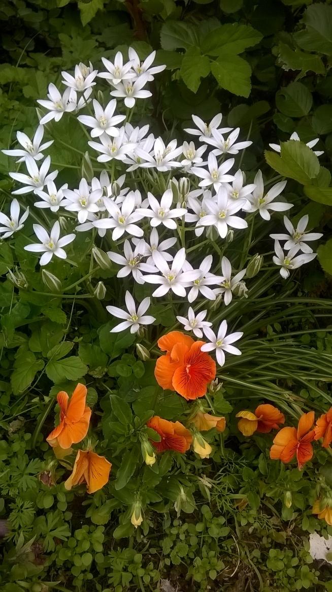 z mojego ogródka