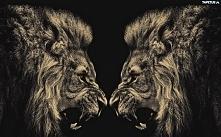 Dwa lwy.
