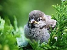Mały ptaszek.
