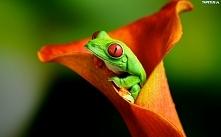 Żaba w kwiatku.