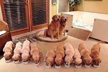 22 przykłady psiej miłości. WIĘCEJ PO KLIKNIĘCIU W OBRAZEK.