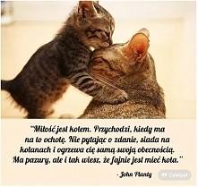 bo milosc jest jak kot...
