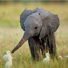 małe słoniątko