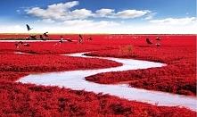 Czerwona Plaża w Panjin.