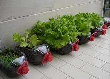 Pomysl na wlasne warzywka :)