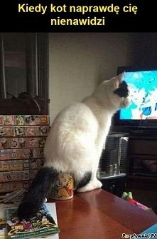 Kiedy kot cię nienawidzi
