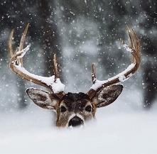 let it snow *.*