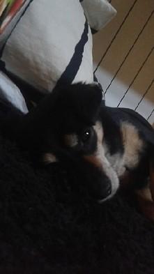 kto kocha psy i nie może bez nich żyć ?