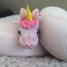 wąż jednorożec wita