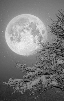 winter moon ETORBA.PL