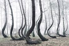 Tajemniczy polski las liczą...