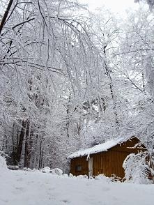 Las zimą...