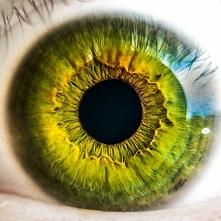 Dbajmy o nasze oczy! Dzięki nim możemy codziennie sprawnie funkcjonować.