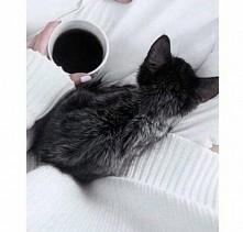 Kotełek *-*