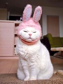 Zobaczcie 17-letnią kotkę, na której punkcie oszalała cała Japonia! To podobn...