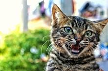 Moje śmieszne historie:  -matma na studiach -jak prowadzić samochód -prezenty -kolokwium -koty