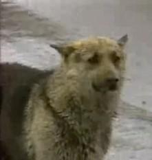 Z tragicznego wypadku wyszedł cało tylko pies. Gdy się dowiedziałam, co zdarz...