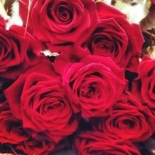 #rose #piekne #roze #from #boyfriend #red #beautiful #love # happiness