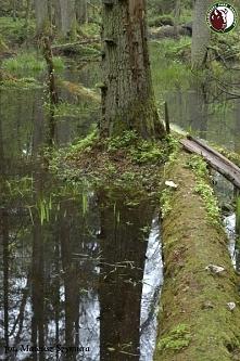 Białowieski Park Narodowy tu przyroda żyje własnym życiem