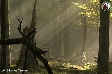 Białowieski Park Narodowy fot.Mateusza Szymura