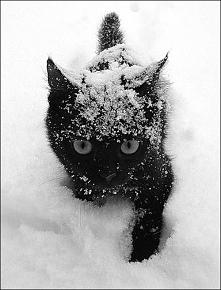 Zimowy kotek