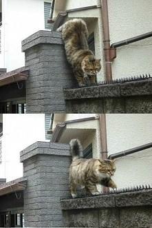 Romeo mój ty Romeo :)