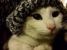 zimowy kociak Antek