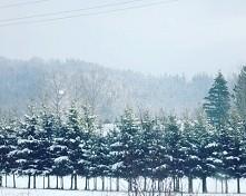 #winter #snow #trees #zima ...