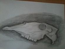 czaszka :)