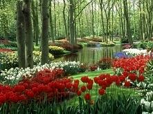 Kwiatowy ogród wodny