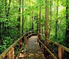 Lubi ktoś spacery po lesie ?