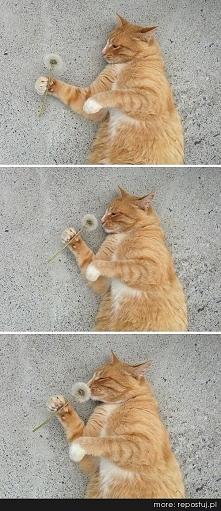 słodki kotek :)