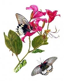 malarstwo botaniczne Krzysztof Kowalski