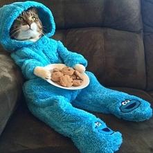 kitty :P