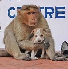 Małpa znalazła na ulicy porzuconego szczeniaka. To, co wydarzyło się później, jest przepiękne! WIĘCEJ PO KLIKNIĘCIU W OBRAZEK.