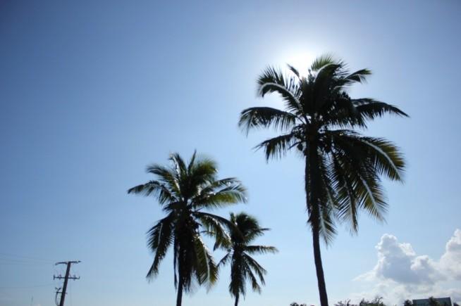 ♥♥♥słońce palmy lato♥♥♥