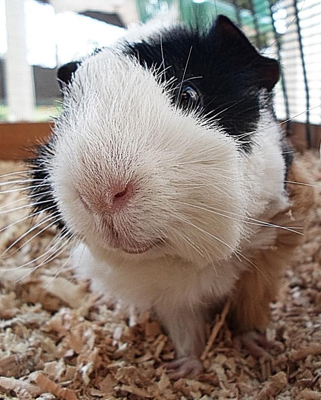 dobry profil nie jest zły;) Elvis w obiektywie :D
