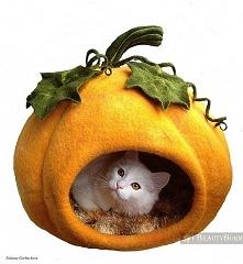 Już dawno po Halloween no ale.... czyż nie urocze ?