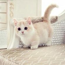 Koteł <3<3<3<3