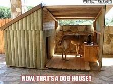 genialny dom dla psa