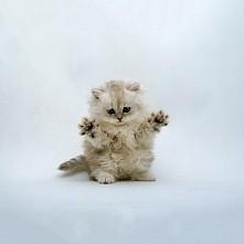 cute^.^