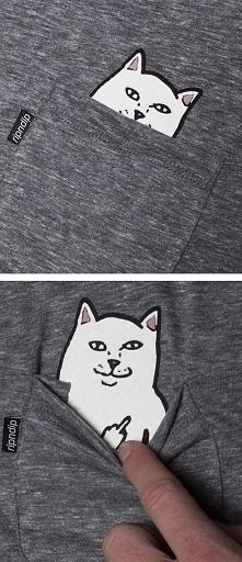 o jaki kotek ;d