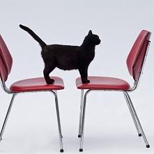 Dwa krzesła w industrialnym...