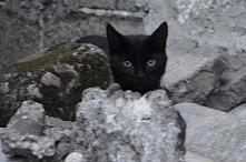 Kotełek <3 ;*