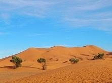 Wydmy na Saharze