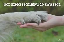 kochajmy zwierzaki