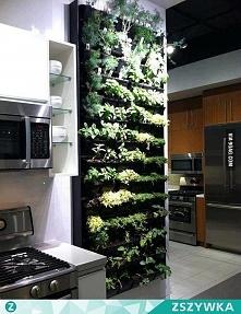 Ziołowy ogródek w kuchni :D