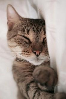 Cat =^..^=