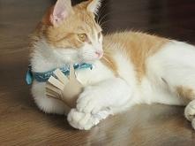 """5 zabawek dla kota """"Zrób to sam"""", cat toys - zobacz na twojediy.pl"""